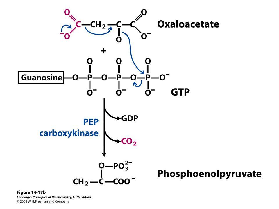 Fructose-2,6-bisphosphate