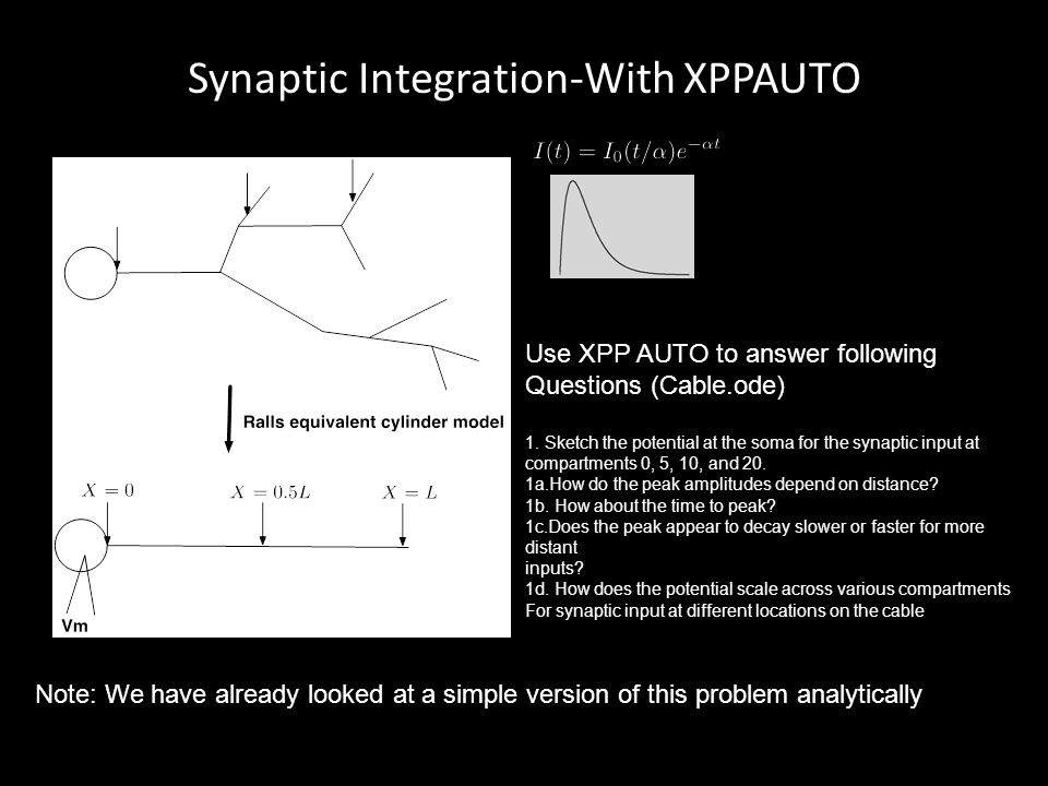 Synaptic Integration-With XPPAUTO Use XPP AUTO to answer following Questions (Cable.ode) 1. Sketch the potential at the soma for the synaptic input at
