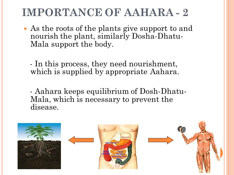 IMPORTANCE OF AAHARA - 2 As the roots of the plants give support to and nourish the plant, similarly Dosha-Dhatu- Mala support the body. - In this pro