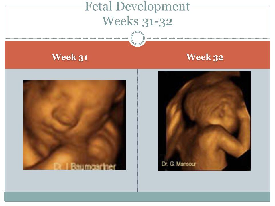 Week 31 Week 32 Fetal Development Weeks 31-32