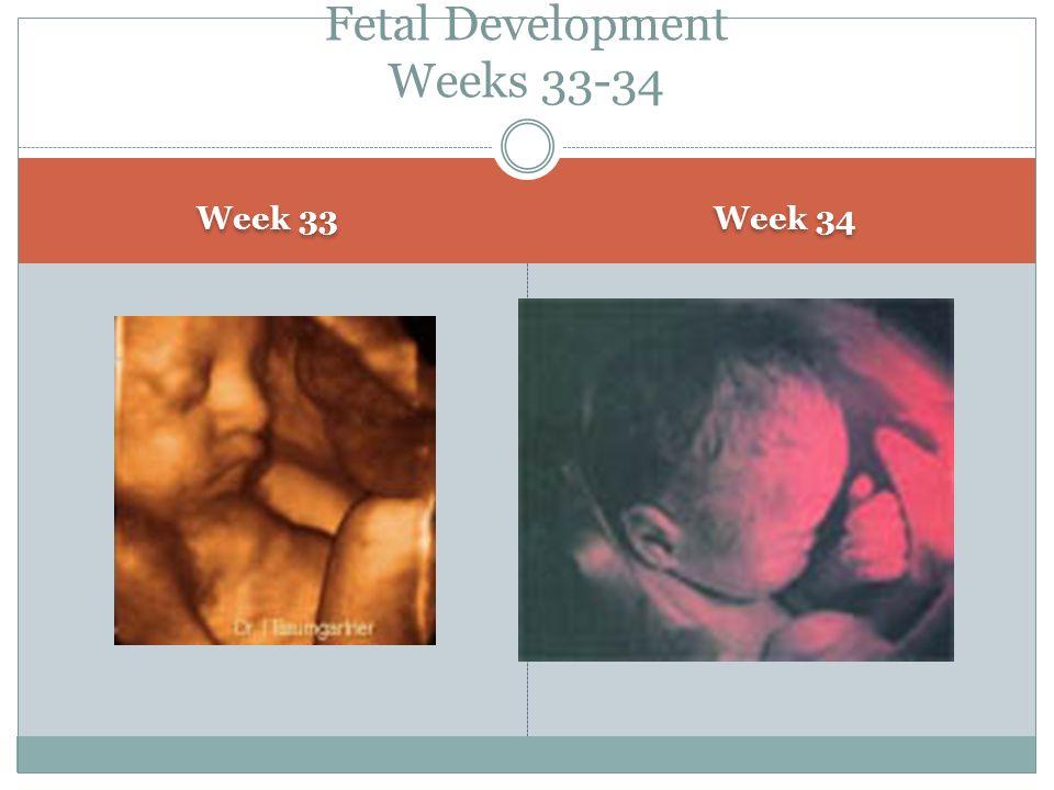 Week 33 Week 34 Fetal Development Weeks 33-34