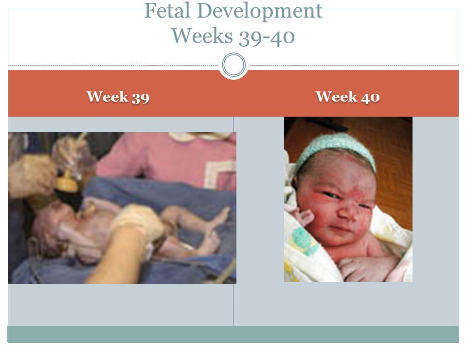 Week 39 Week 40 Fetal Development Weeks 39-40