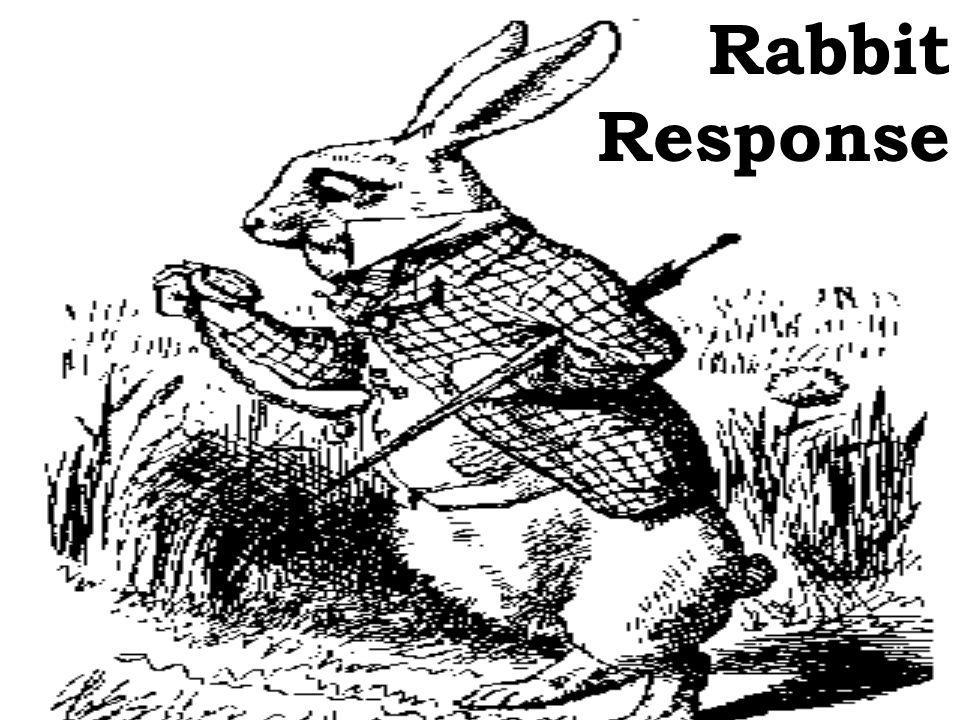 Rabbit Response