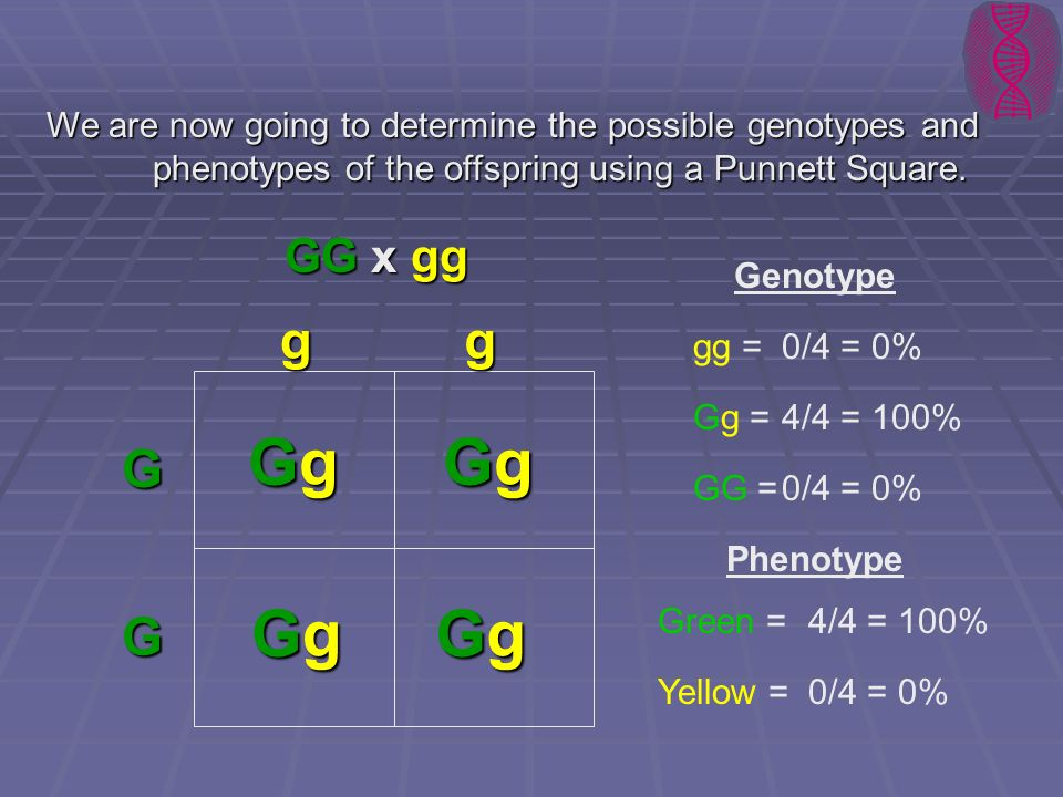 Genotype And Phenotype Punnett Square