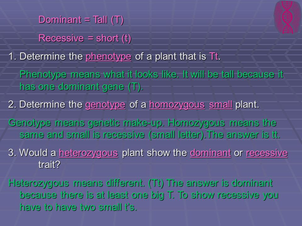 Dominant = Tall (T) Recessive = short (t) 1.Determine the phenotype of a plant that is Tt. Phenotype means what it looks like. It will be tall because