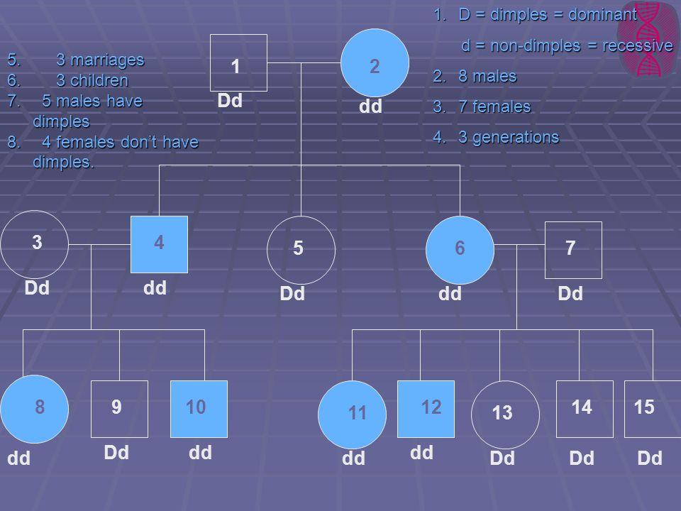 21 1514 13 9 75 34 6 810 11 12 Dd dd Dd dd DdddDd ddDd dd Dd 1.D = dimples = dominant d = non-dimples = recessive d = non-dimples = recessive 2.8 male
