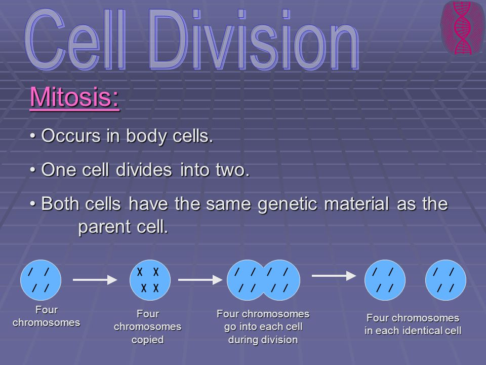 Mitosis: Occurs in body cells. Occurs in body cells. One cell divides into two. One cell divides into two. Both cells have the same genetic material a
