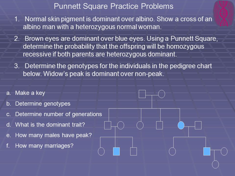 Punnett Square Practice Problems 1. 1. Normal skin pigment is dominant over albino. Show a cross of an albino man with a heterozygous normal woman. 2.