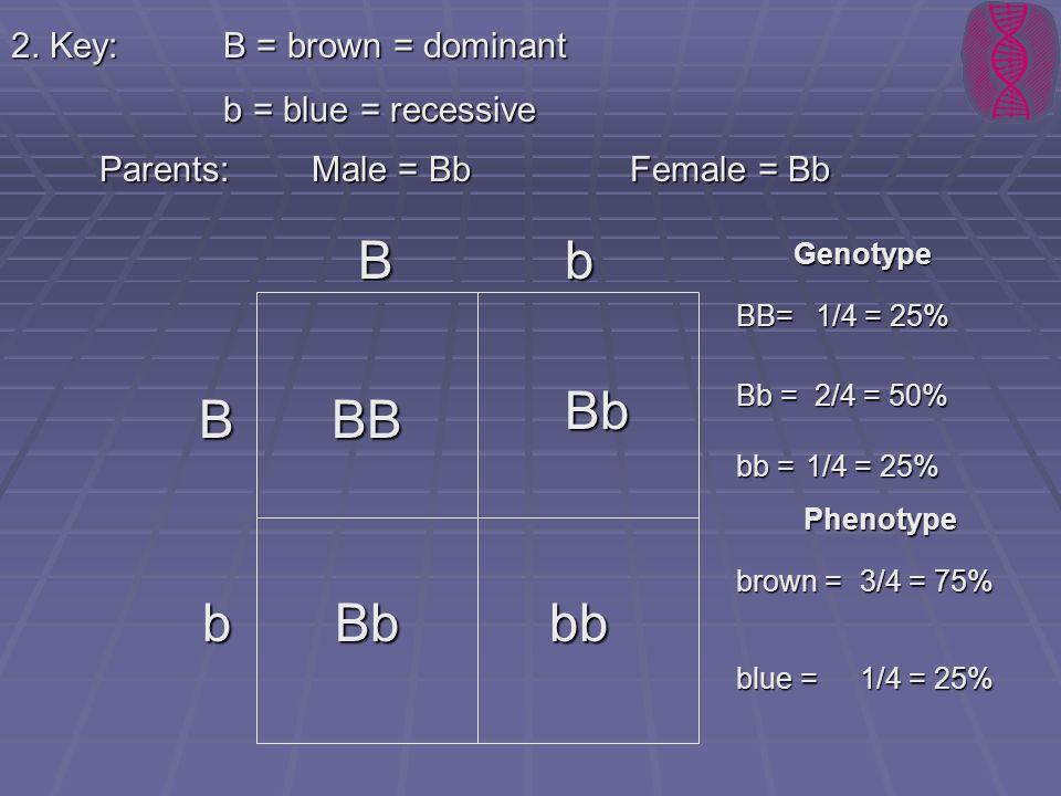 2. Key:B = brown = dominant b = blue = recessive Parents: Male = BbFemale = Bb B b B Bb BB bbBb b Genotype Phenotype brown = blue = 3/4 = 75% 1/4 = 25