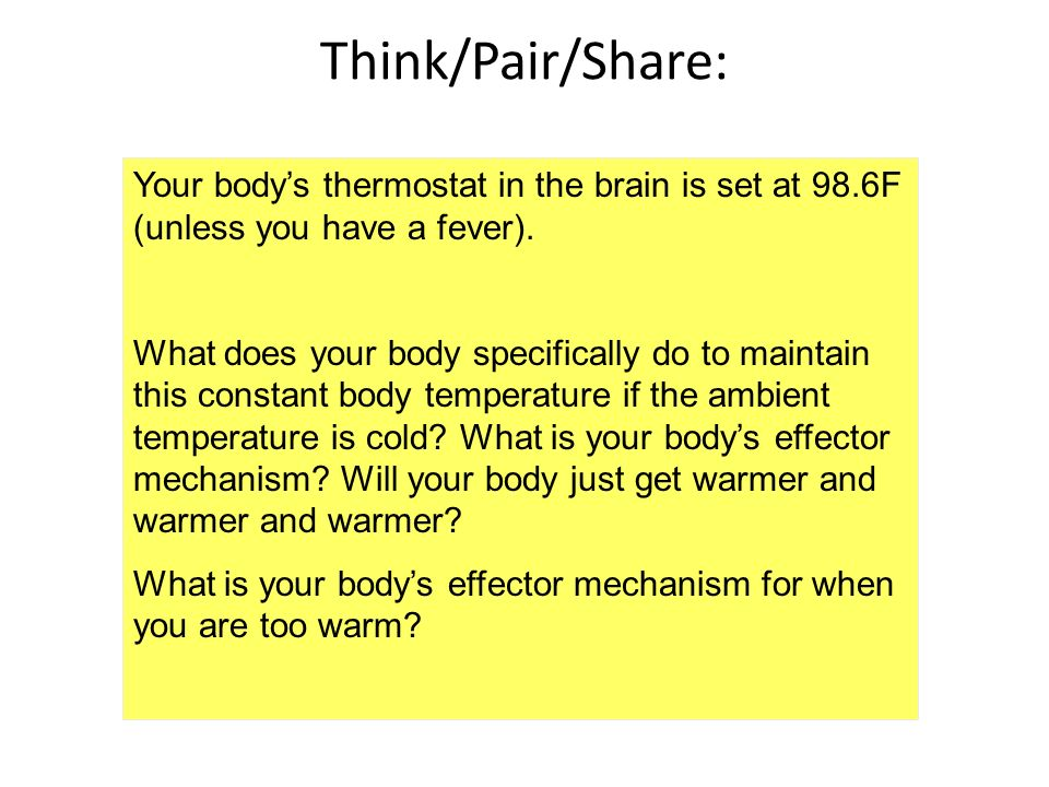 Your bodys thermostat in the brain is set at 98.6F (unless you have a fever). What does your body specifically do to maintain this constant body tempe
