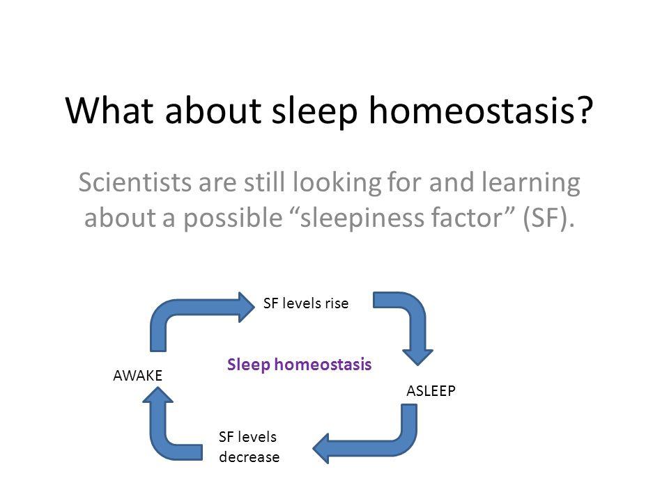 What about sleep homeostasis.