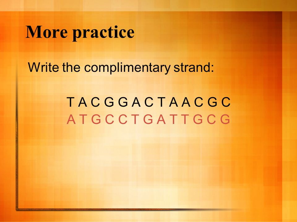 More practice Write the complimentary strand: T A C G G A C T A A C G C A T G C C T G A T T G C G