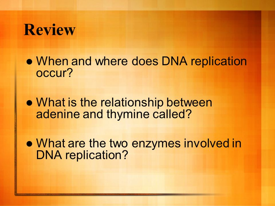 Review When and where does DNA replication occur? What is the relationship between adenine and thymine called? What are the two enzymes involved in DN