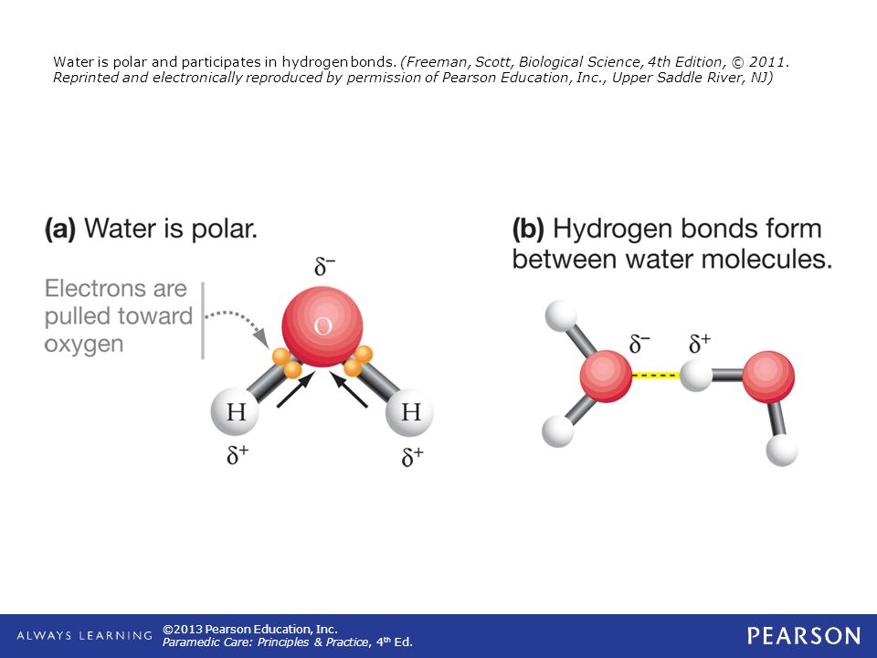 ©2013 Pearson Education, Inc. Paramedic Care: Principles & Practice, 4 th Ed. Water is polar and participates in hydrogen bonds. (Freeman, Scott, Biol