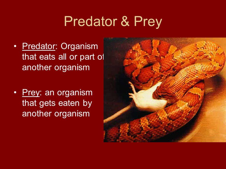 Predator & Prey Predator: Organism that eats all or part of another organism Prey: an organism that gets eaten by another organism