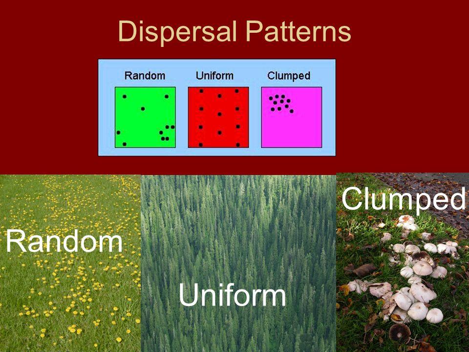 Dispersal Patterns Random Clumped Uniform