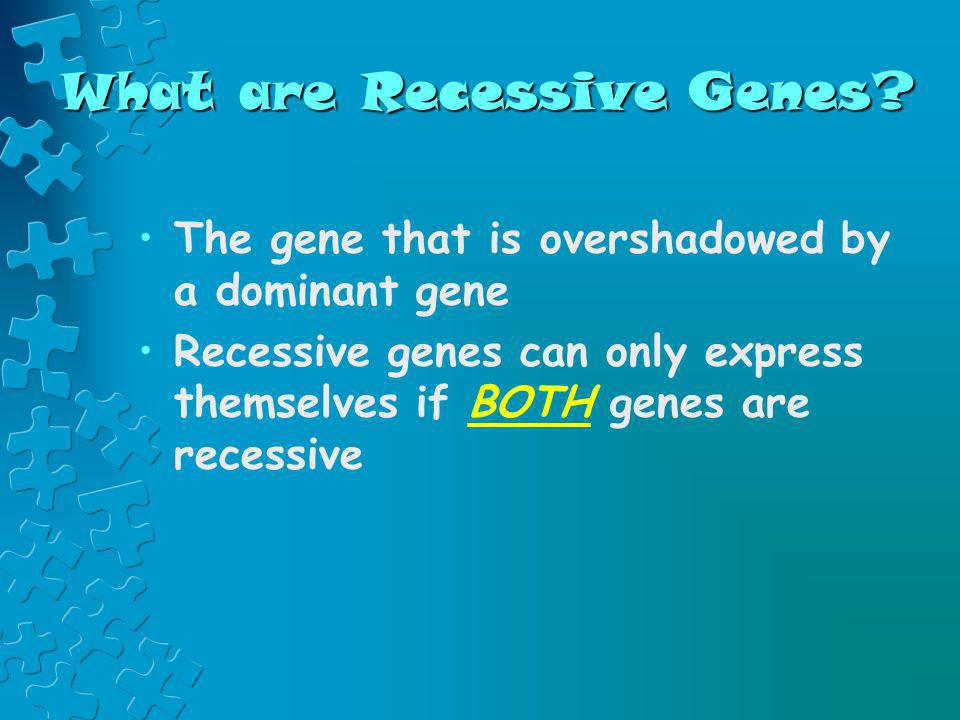What are Recessive Genes? The gene that is overshadowed by a dominant gene Recessive genes can only express themselves if BOTH genes are recessive