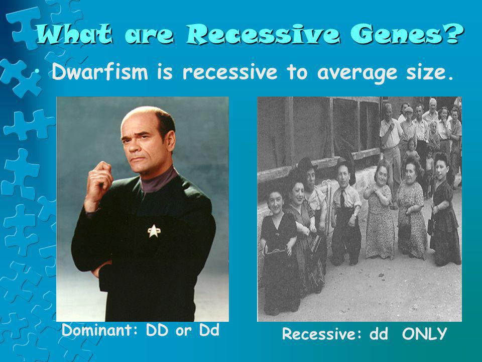 What are Recessive Genes? Dwarfism is recessive to average size. Dominant: DD or Dd Recessive: dd ONLY