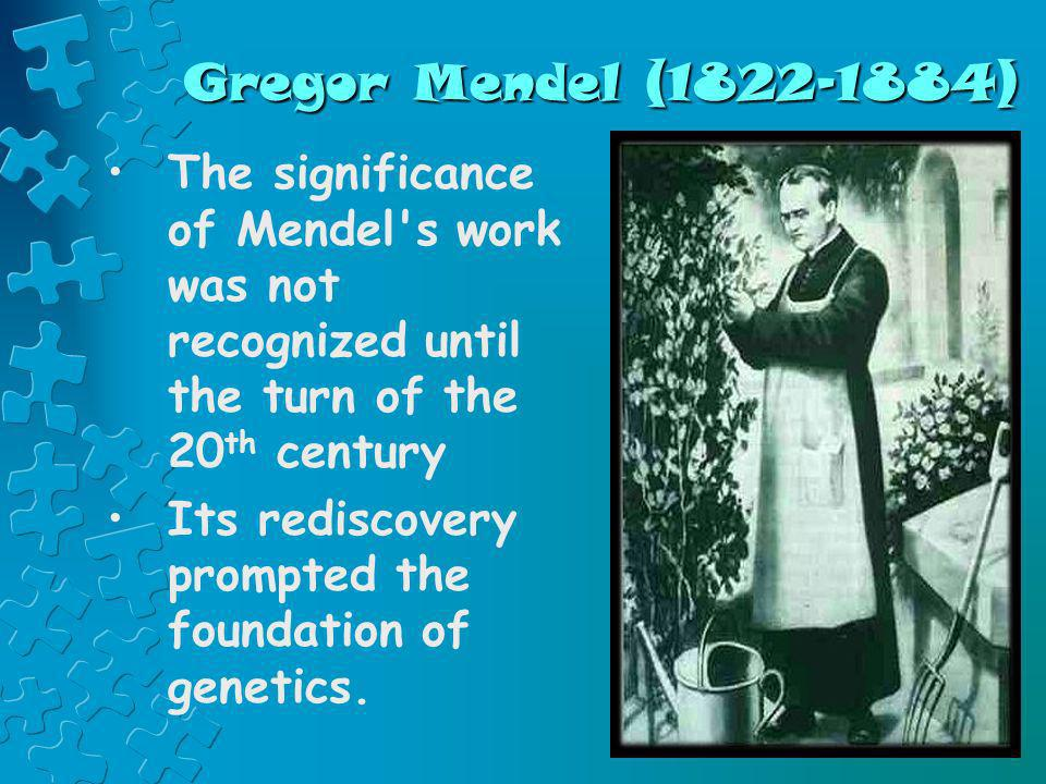 Gregor Mendel (1822-1884) The significance of Mendel's work was not recognized until the turn of the 20 th century Its rediscovery prompted the founda