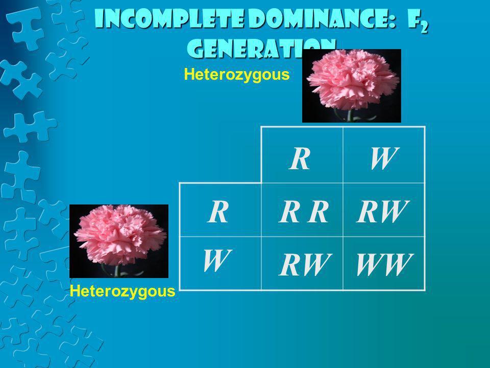 RRR RW W WW RW R W Heterozygous Incomplete dominance: F 2 generation