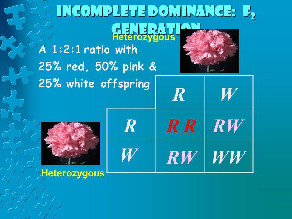 RRR RW W WW RW R W Heterozygous Incomplete dominance: F 2 generation A 1:2:1 ratio with 25% red, 50% pink & 25% white offspring Heterozygous