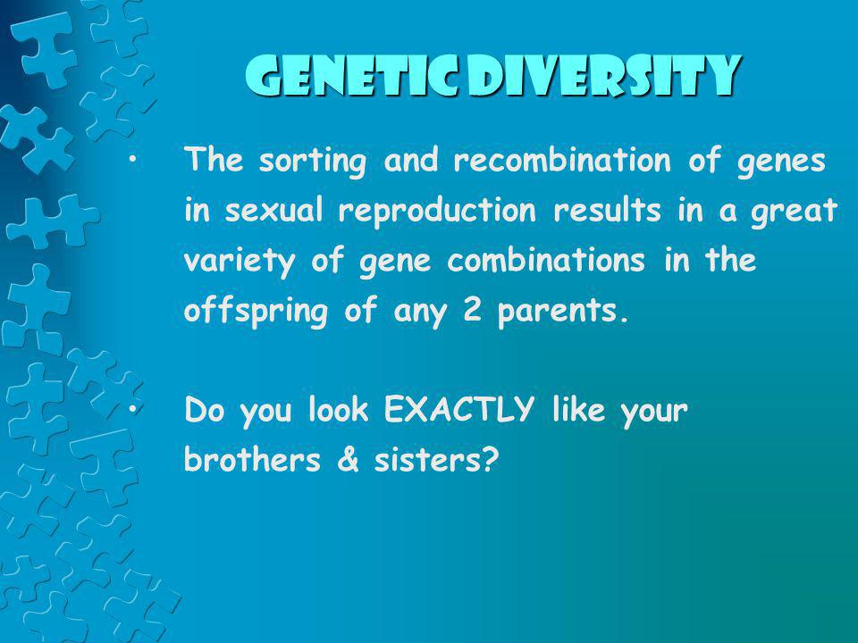 Genetic Diversity The sorting and recombination of genes in sexual reproduction results in a great variety of gene combinations in the offspring of an