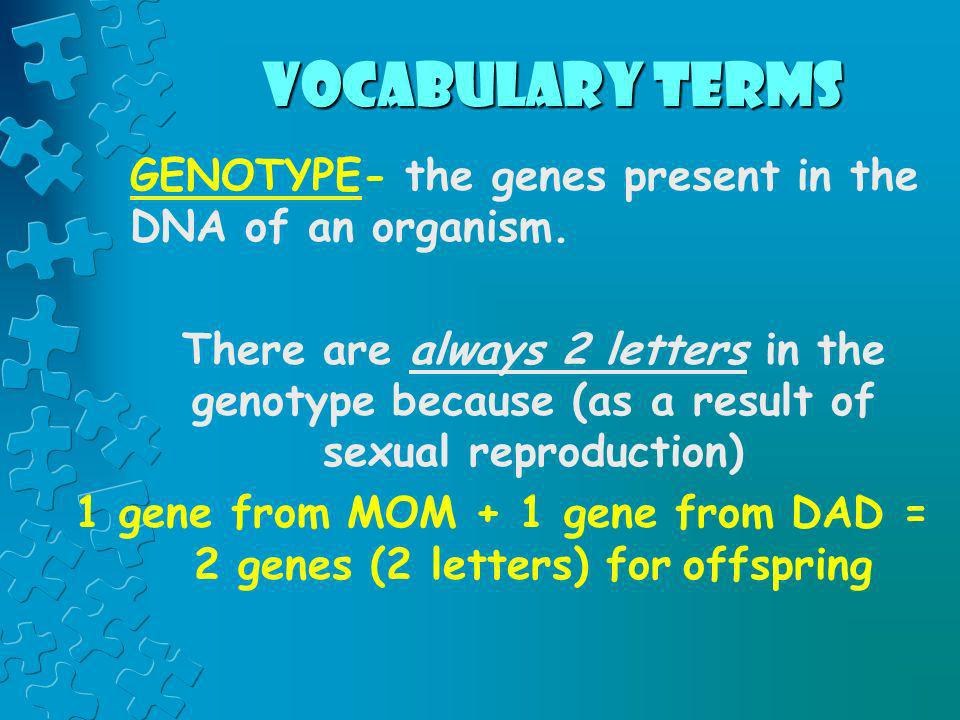 vocabulary terms GENOTYPE- the genes present in the DNA of an organism. There are always 2 letters in the genotype because (as a result of sexual repr