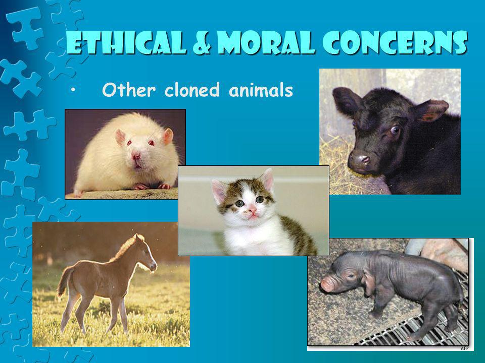 Ethical & Moral Concerns Other cloned animals