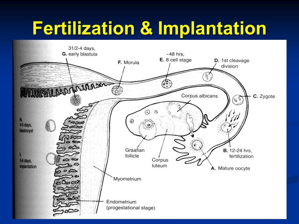 Fertilization & Implantation
