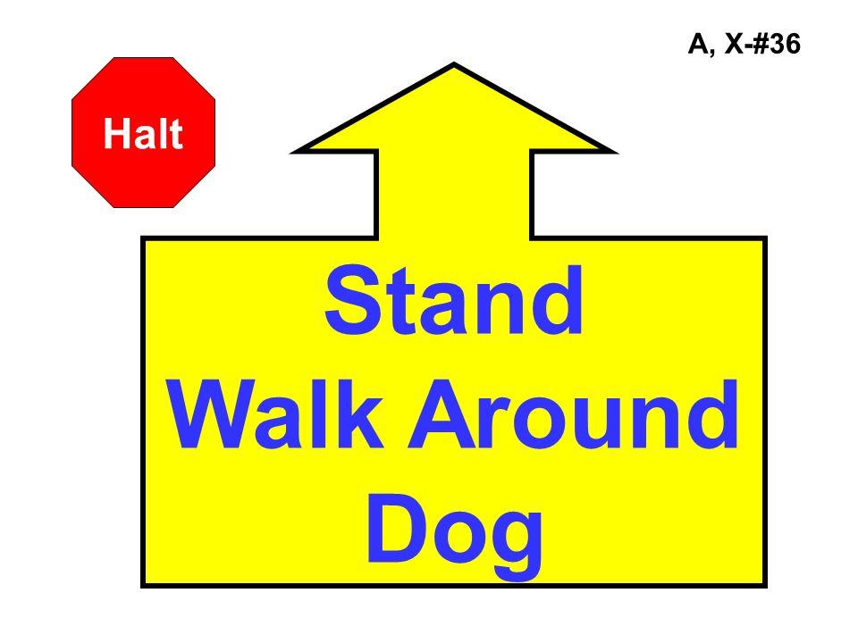 A, X-#36 Stand Walk Around Dog Halt
