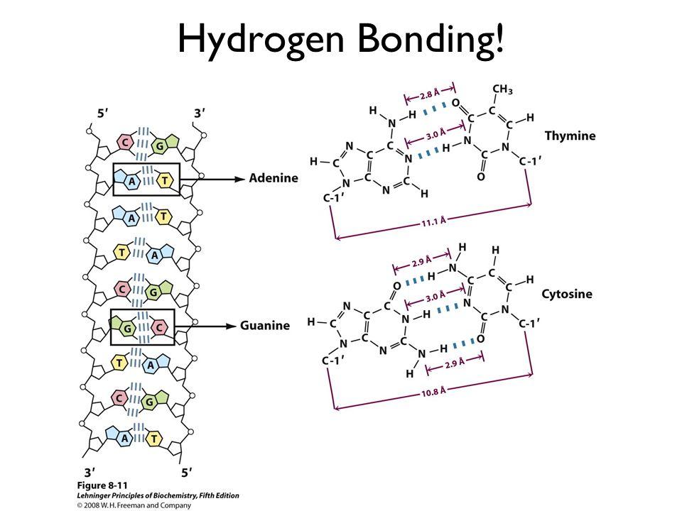 Hydrogen Bonding!