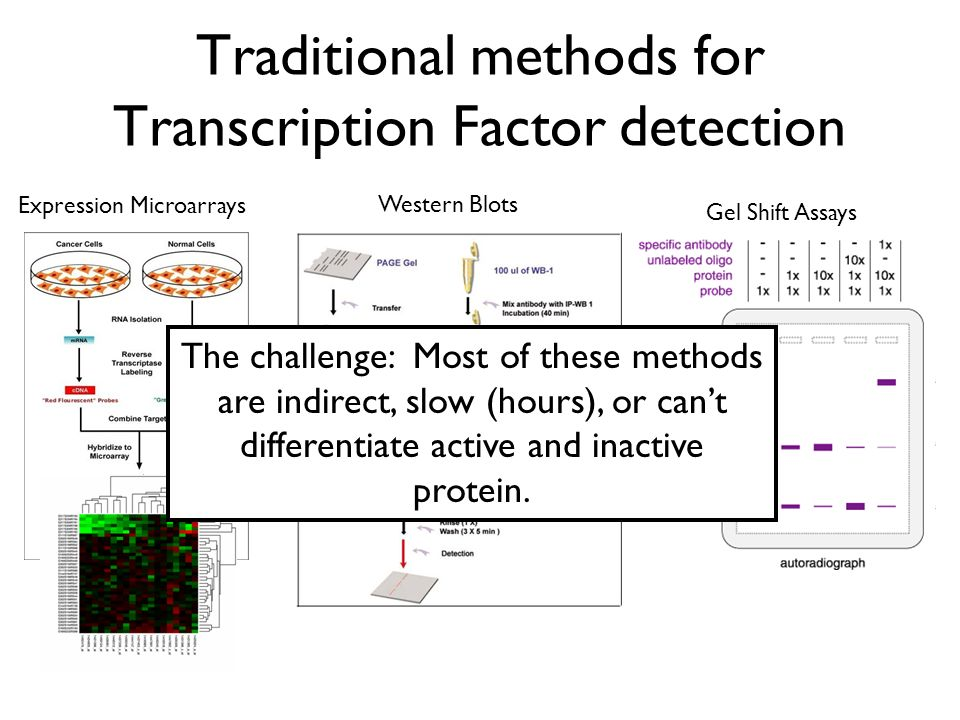 Traditional methods for Transcription Factor detection Expression Microarrays Gel Shift Assays The challenge: Most of these methods are indirect, slow
