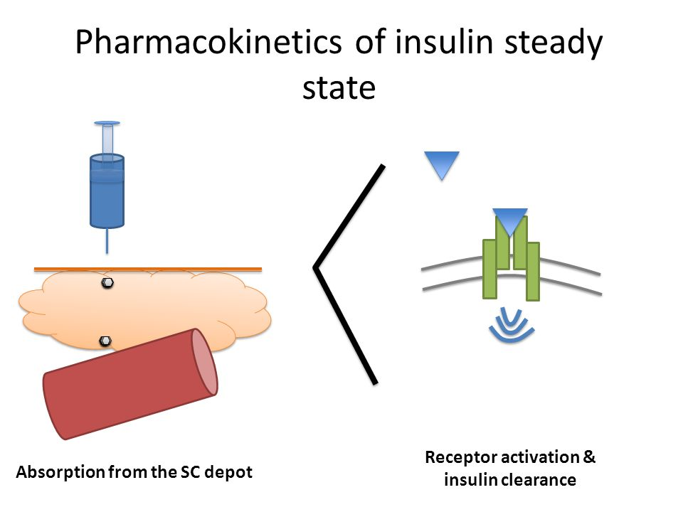 Pharmacokinetics of insulin steady state Absorption from the SC depot Receptor activation & insulin clearance