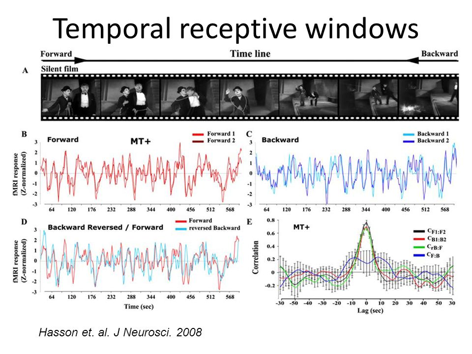 Temporal receptive windows Hasson et. al. J Neurosci. 2008