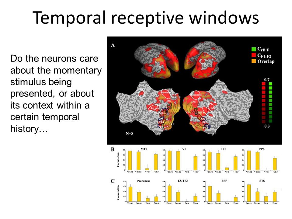 Temporal receptive windows Do the neurons care about the momentary stimulus being presented, or about its context within a certain temporal history…