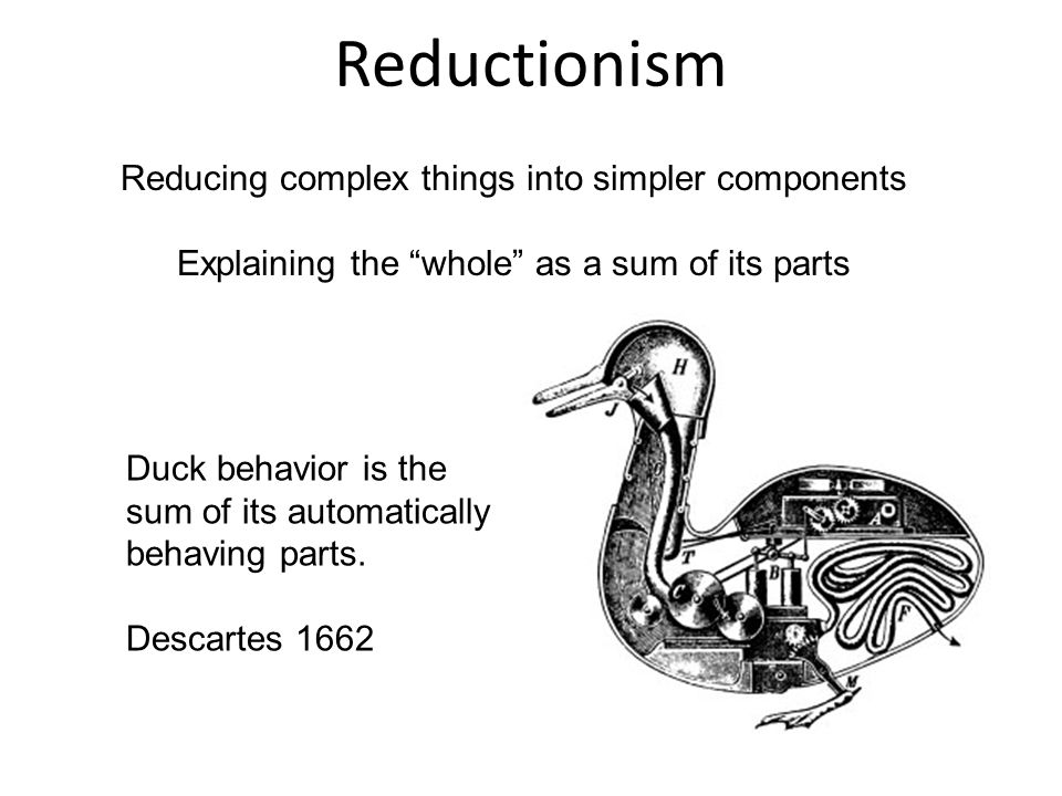 Reductionism Reducing complex things into simpler components Explaining the whole as a sum of its parts Duck behavior is the sum of its automatically behaving parts.