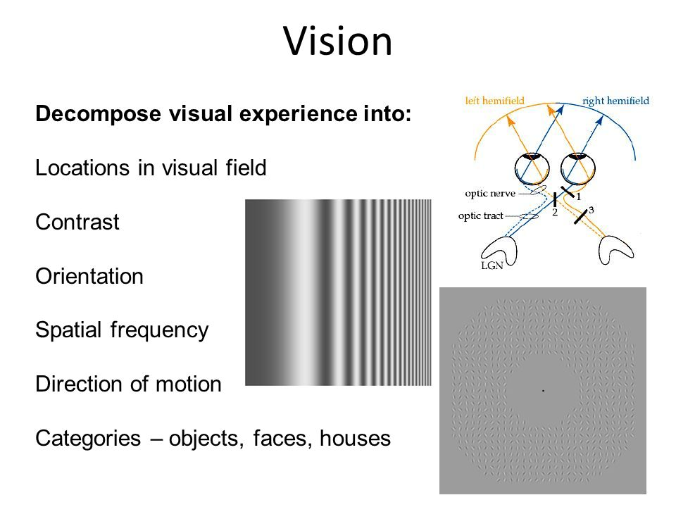 Vision Decompose visual experience into: Locations in visual field Contrast Orientation Spatial frequency Direction of motion Categories – objects, faces, houses