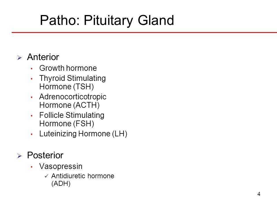 4 Patho: Pituitary Gland Anterior Growth hormone Thyroid Stimulating Hormone (TSH) Adrenocorticotropic Hormone (ACTH) Follicle Stimulating Hormone (FS