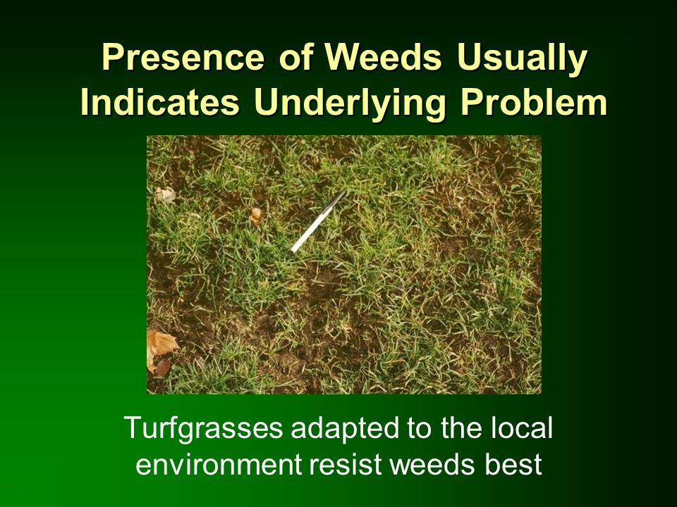 Non-Toxic Pesticides Misnomer: Pesticides intended to be toxic to pests EPA regulates toxicity: no significant danger when used properly Avoid reliance on non-regulated biological or organic pesticides –May not work –No toxicity testing!
