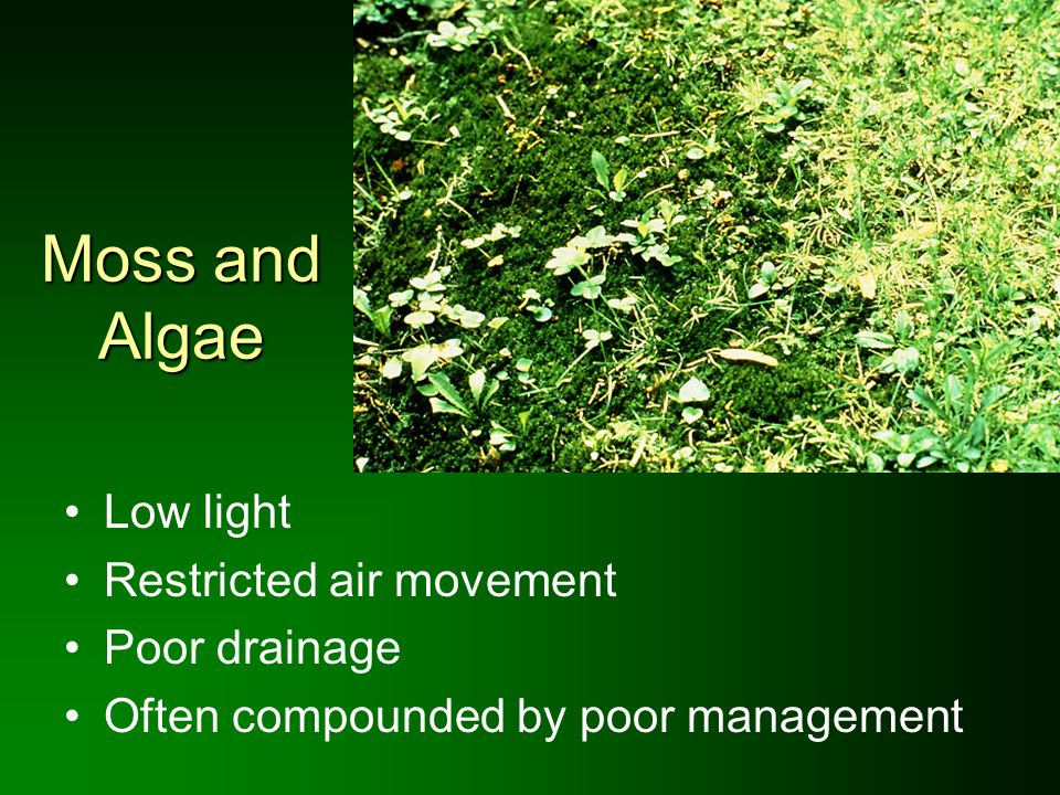 Moss and Algae Low light Restricted air movement Poor drainage Often compounded by poor management