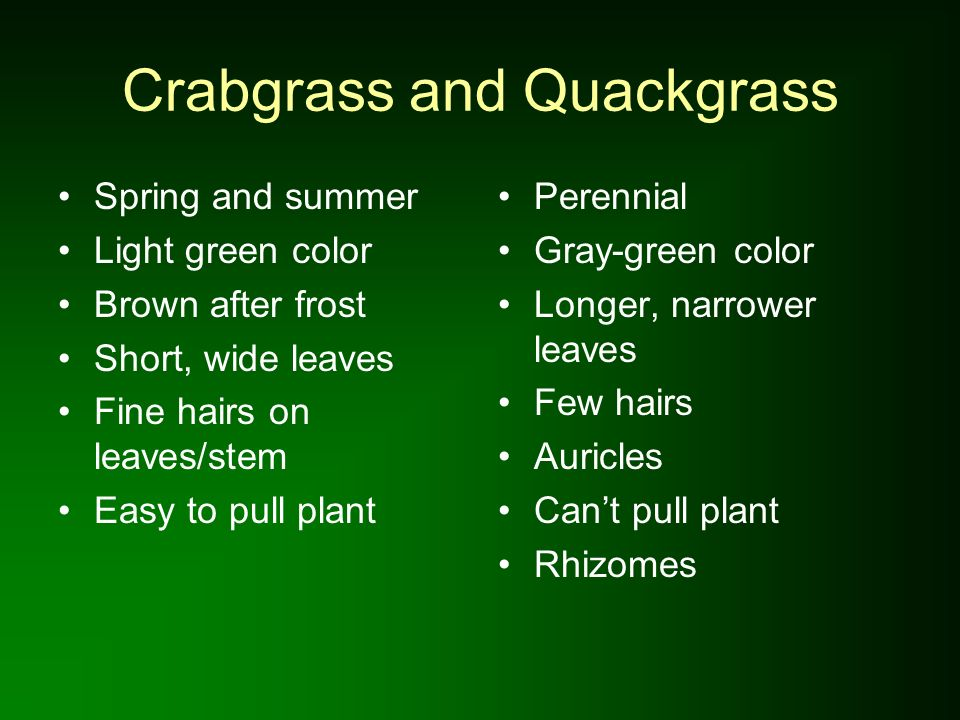 Crabgrass Reduction in Field Trials of Corn Gluten Meal on Kentucky Bluegrass Adapted from Christians, N.E.