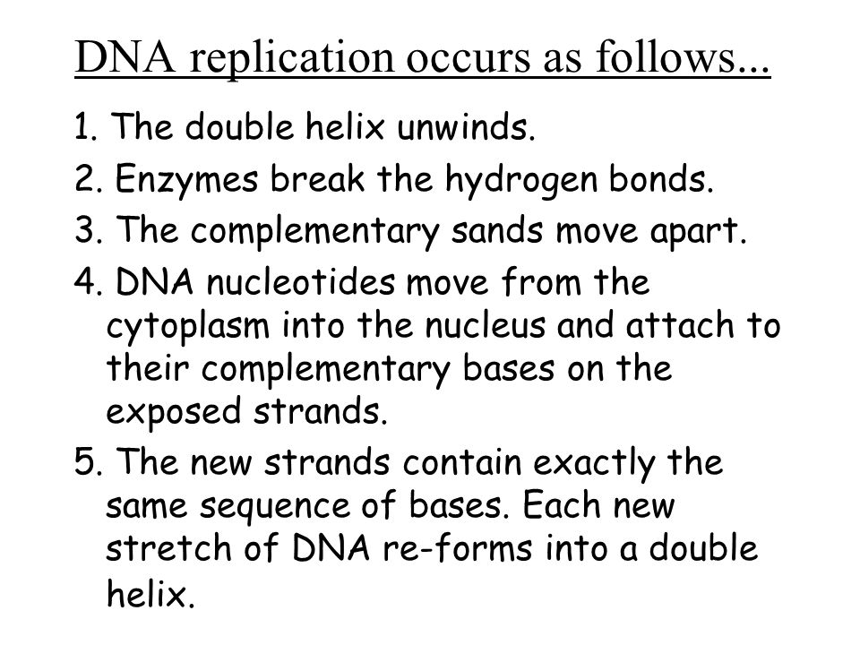 DNA replication occurs as follows... 1. The double helix unwinds. 2. Enzymes break the hydrogen bonds. 3. The complementary sands move apart. 4. DNA n