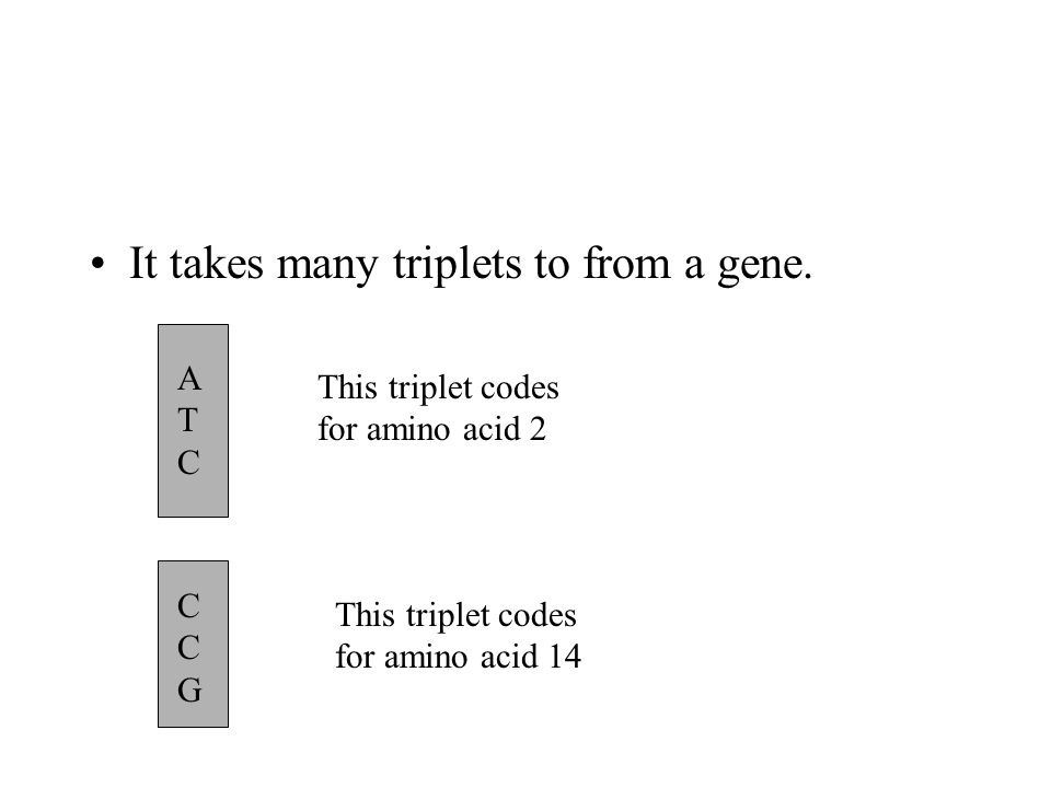 It takes many triplets to from a gene. ATCATC This triplet codes for amino acid 2 CCGCCG This triplet codes for amino acid 14