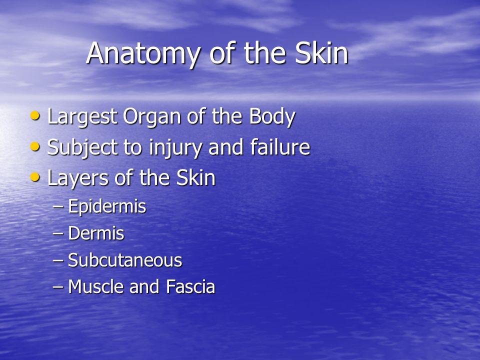 Anatomy of the Skin Anatomy of the Skin Largest Organ of the Body Largest Organ of the Body Subject to injury and failure Subject to injury and failur