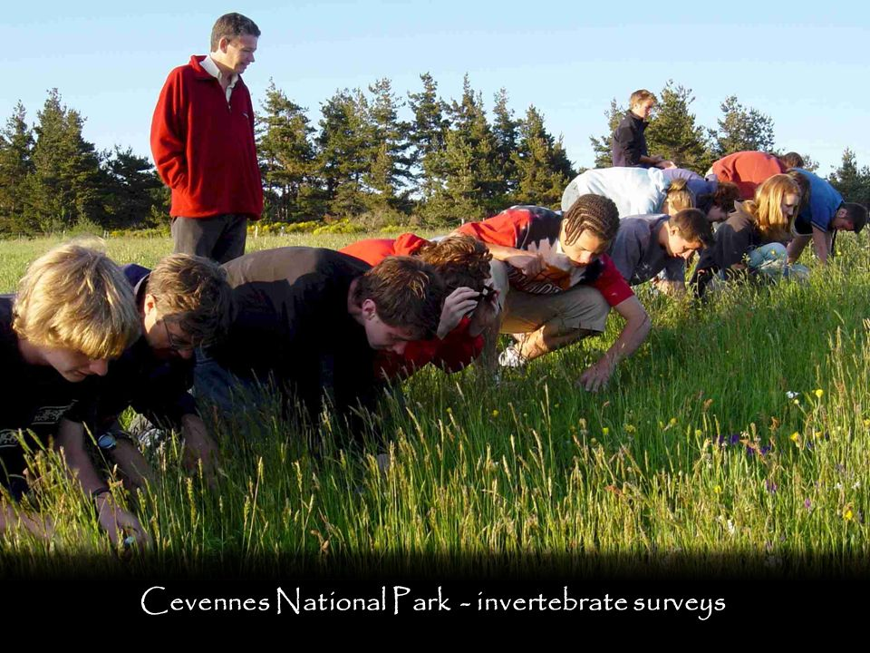 Cevennes National Park - invertebrate surveys