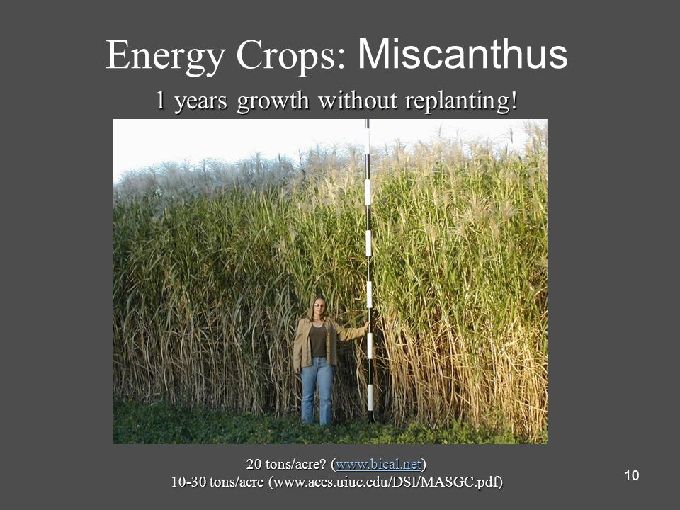 10 Energy Crops: Miscanthus 20 tons/acre? (www.bical.net) www.bical.net 10-30 tons/acre (www.aces.uiuc.edu/DSI/MASGC.pdf) 1 years growth without repla