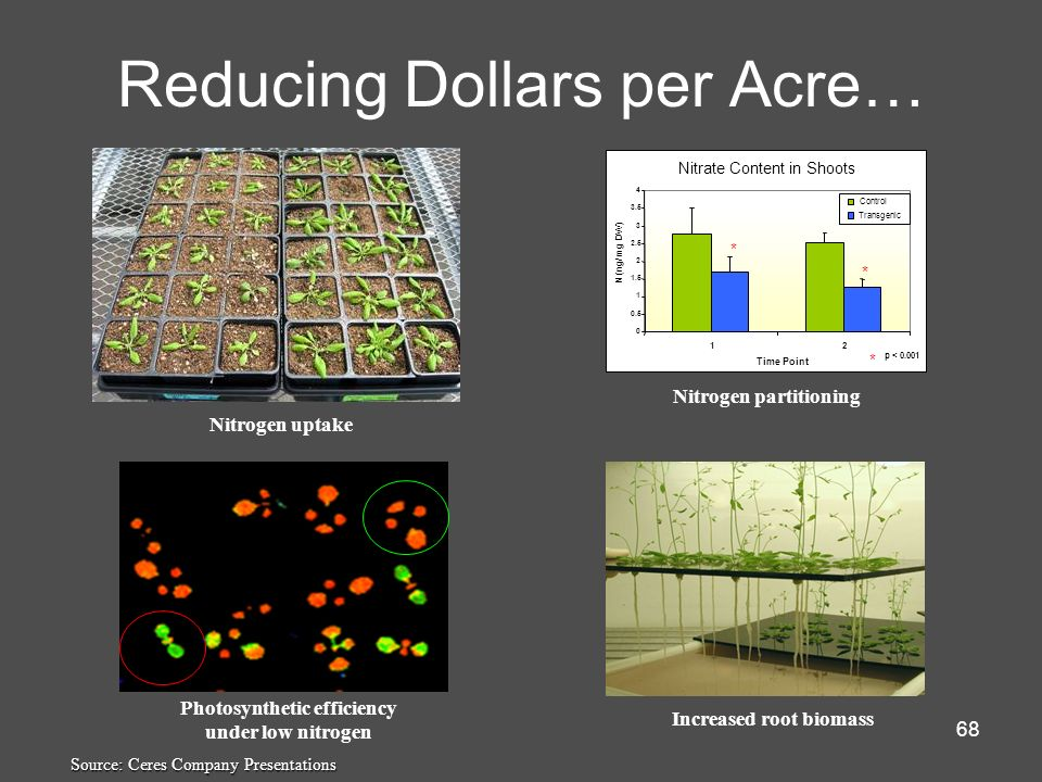 68 Reducing Dollars per Acre… Nitrogen uptake Nitrate Content in Shoots 0 0.5 1 1.5 2 2.5 3 3.5 4 12 Time Point N (ng/ mg DW) Control Transgenic * * *