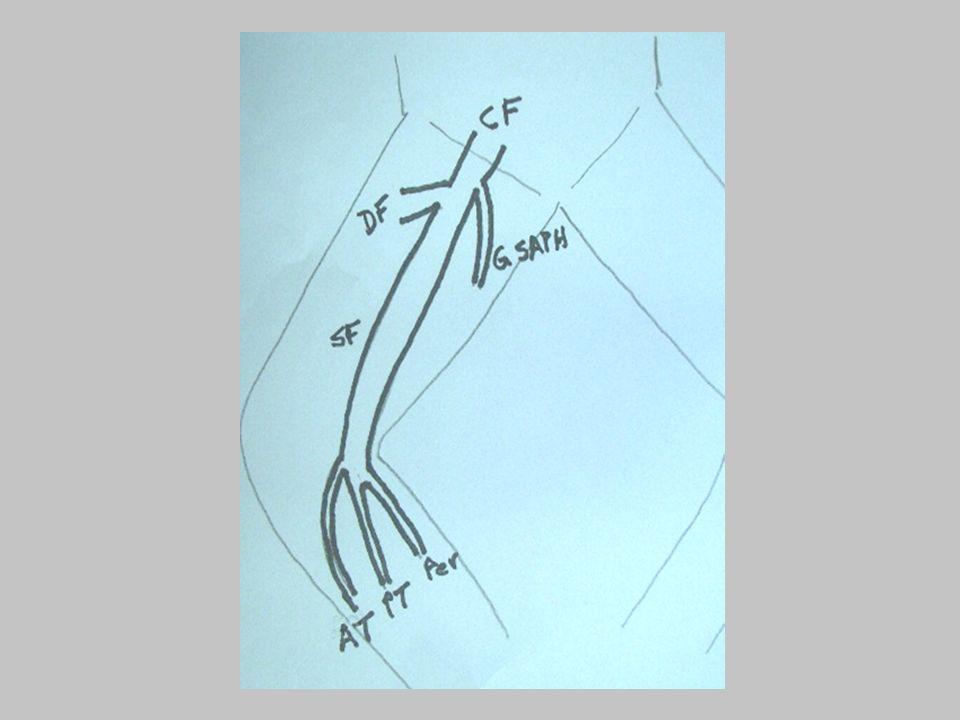 clip: lymph node