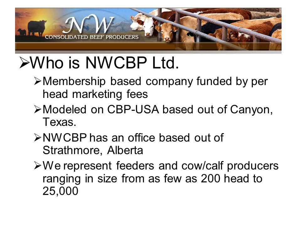 Who is NWCBP Ltd. Membership based company funded by per head marketing fees Modeled on CBP-USA based out of Canyon, Texas. NWCBP has an office based