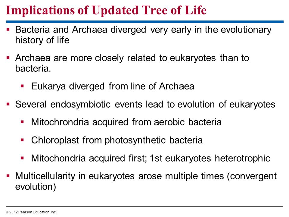 Bacteria and Archaea diverged very early in the evolutionary history of life Archaea are more closely related to eukaryotes than to bacteria. Eukarya